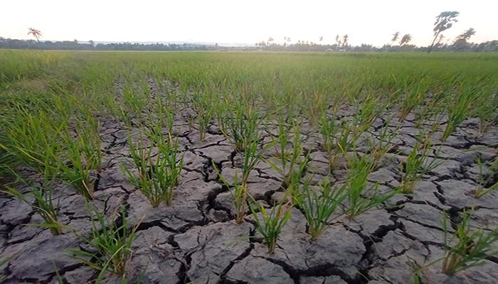 Tanah sawah pecah akibat kekurangan air/Benyamin Ludji Riwu
